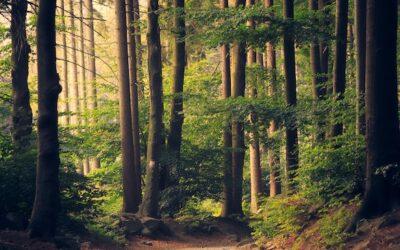 Traumreise Text – Einfach Mal Die Seele Baumeln Lassen